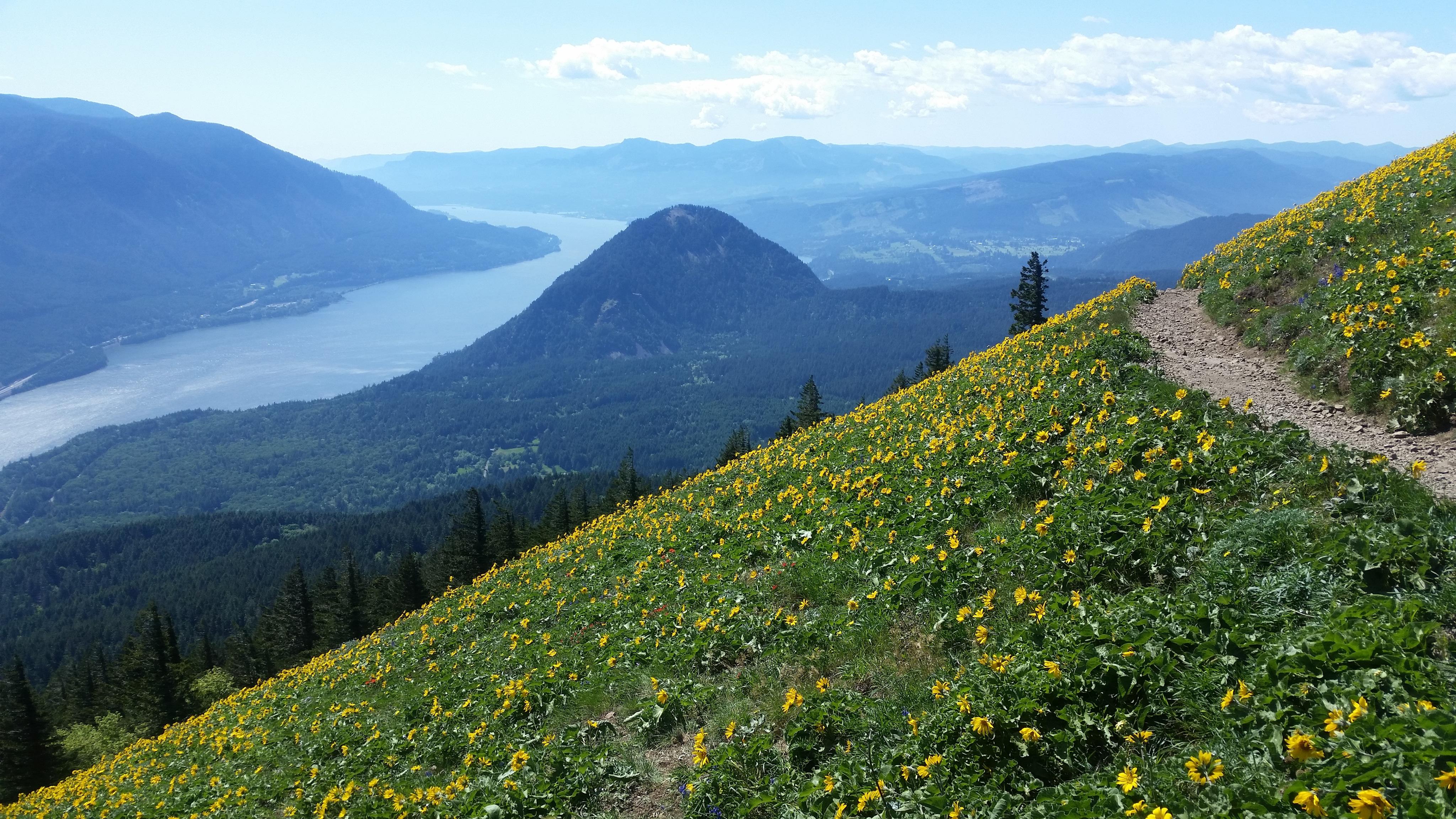 Hiking Dog Mountain