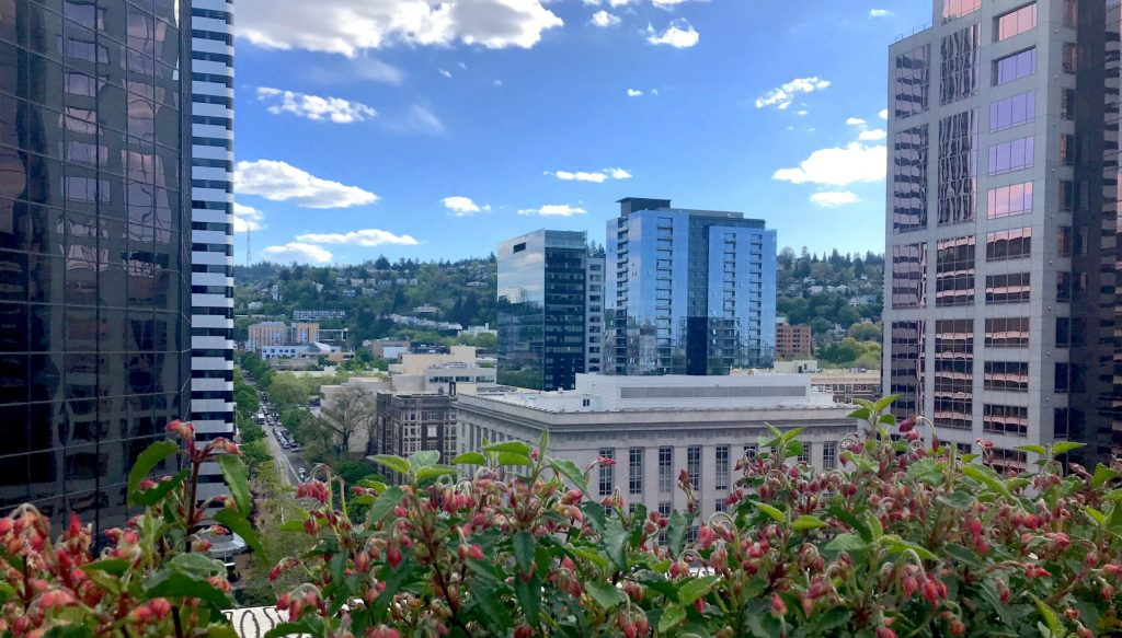 A view of Portland with buildings in the background and flowers in the foreground